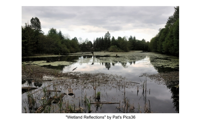 BC Wetlands Photo of the Week #16