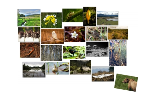 BC Wetlands Photos of the week 1-20