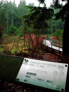 Entering the Camosun Bog. Image by Rachel Schott.