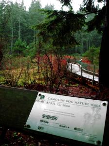 Entering the Camosun Bog. Image by Rachel Schott.