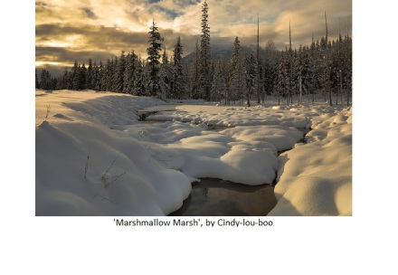 'Marshmallow Marsh' by Flickr Username Cindy-lou-boo