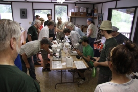 Guests check out the insects they caught in the wetland under the microscopes. Photo by Eryne Donahue.