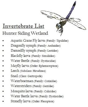 Invertebrate list