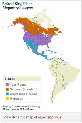 belted kingfisher distribution map