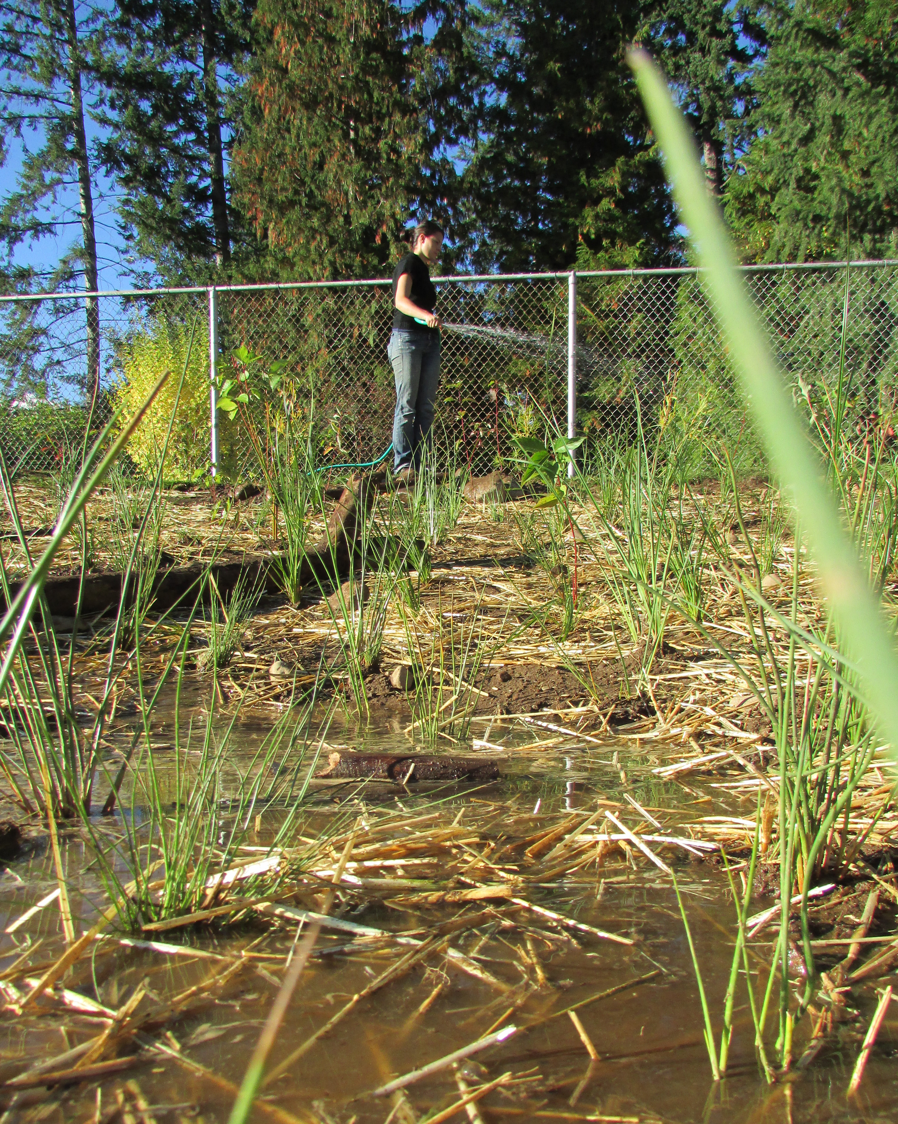 Kalyla watering the wetland!