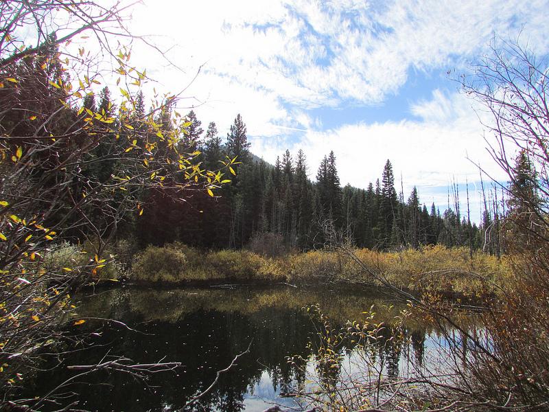 A beautiful swamp near Peachland.