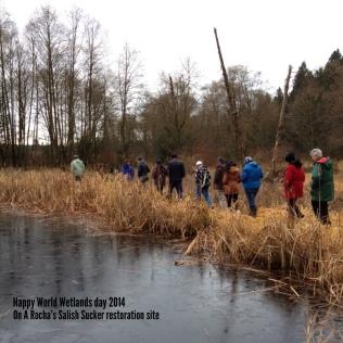 A walk through the wetland site