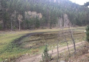 This wetland has been overgrazed by roaming cattle and degraded by off-road mud-boggers.