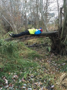 Students find balance in their backyard wetland