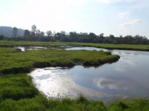 Genstar wetlands. Image courtesy of www.ducks.ca