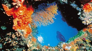 The Great Barrier Reef. Image courtesy of www.brisbanetimes.com.au