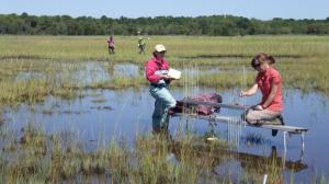 Students studying sediment levels in a New Jersey marsh. Image courtesy of www.sciencedaily.com