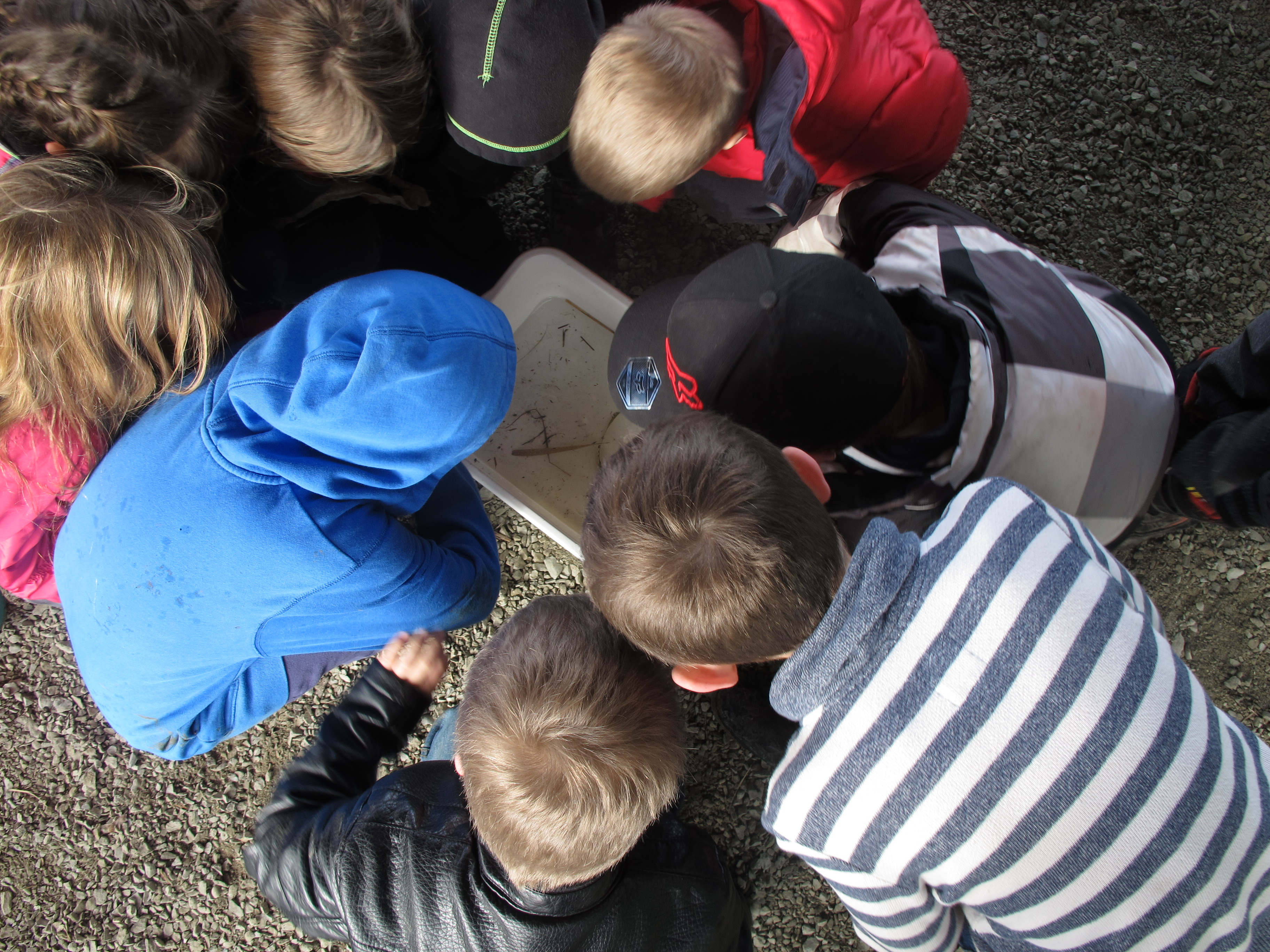 Students viewing inverts