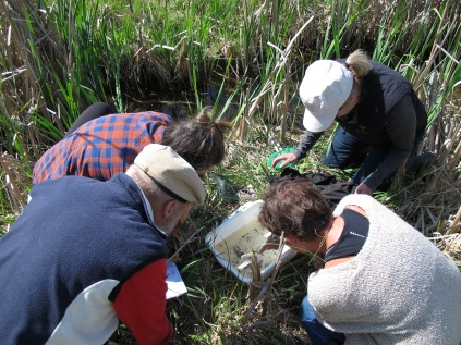 Participants looking at aquatic invertebrates