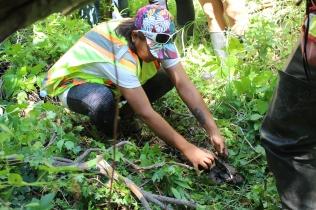 Examining the soil sample