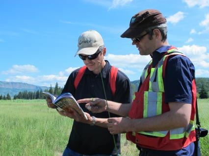 Identifying wetland plants