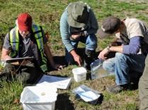 IDing invertebrates